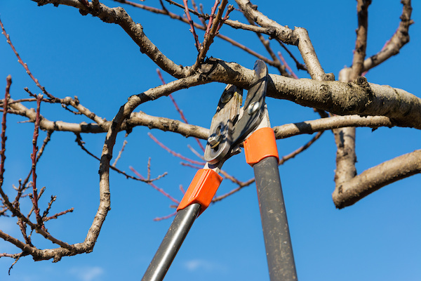 Tree-Topping-Pruning-and-Removal
