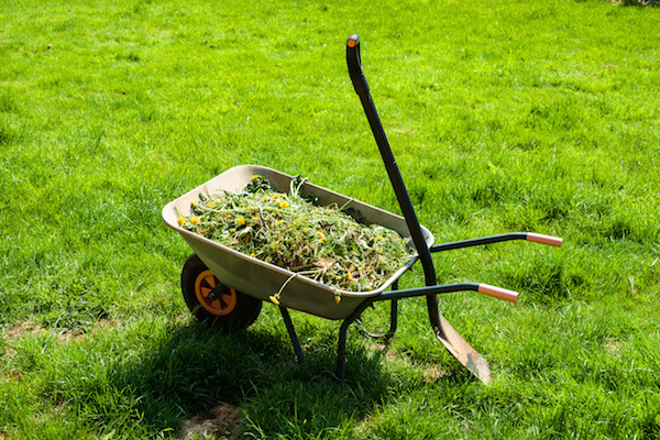 Weeding-Maintenance-Programs